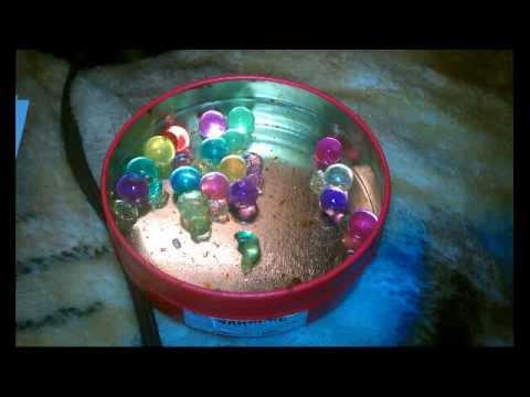 How To Make Your Orbeez Grow Bigger