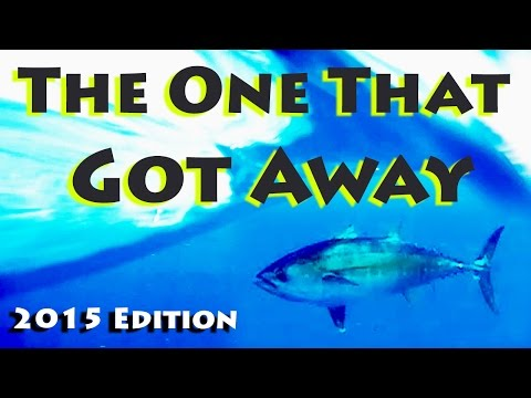 The One That Got Away - 2015 Big Blackfin Tuna