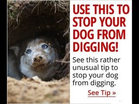 How to Stop Your Dog From Digging ►Stop Your Dog Digging