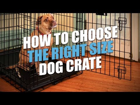 How to Choose the Right Size Dog Crate (for a Perfect Fit)