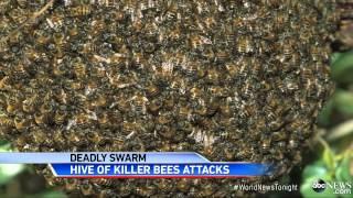 Download African Killer Bees Kill Landscaper in Tucson Video
