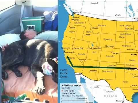 Dream Bigger: Thriving Canine