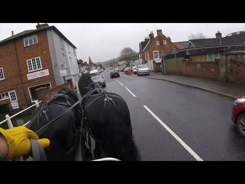 Driving a pair of Friesian stallions in town - Barry Hook, Horse Drawn Promotions
