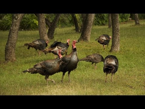 5 Turkey Hunting Tips | Archery Lessons