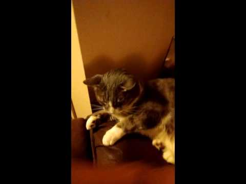 My Cat Reacting To: Static Electricity