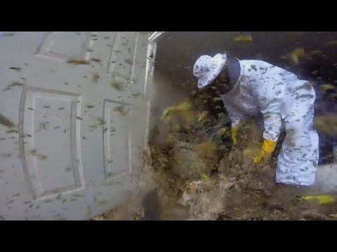 Exterminator Uses GoPro to Show What It's Really Like Removing Hornets' Nest