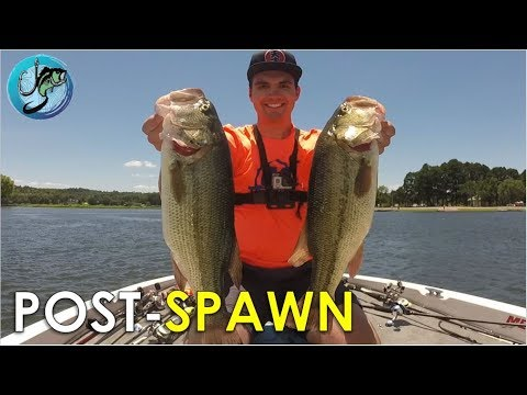 4 Proven Post-Spawn Patterns for Largemouth Bass