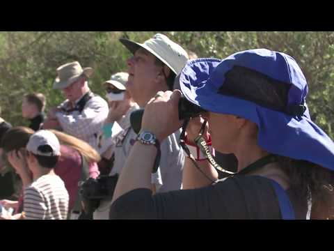 Migratory Bird Day Celebrated at Clark County Wetlands Park