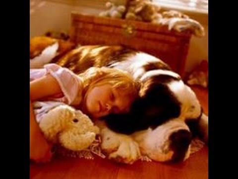 On Command Canine Training Center / Autism Service Dog Training