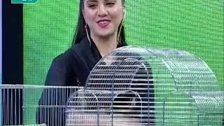 Download Salam Afghanistan آقای غلام حضرت از کوچه کاه فروشی Video