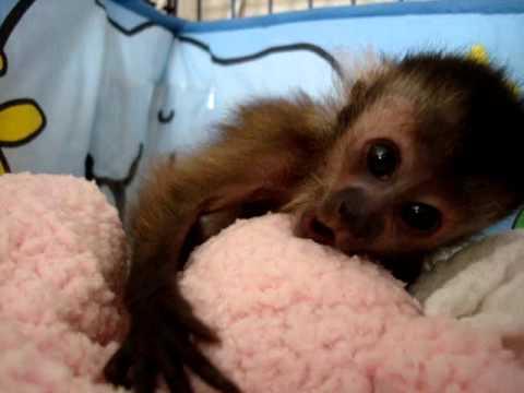Baby Monkey Nala waking up...