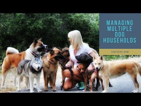 Managing Multiple Dog Households