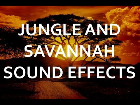 Amazing jungle and savannah sound effects - pure nature ambience recordings