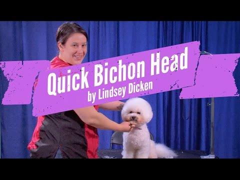Bichon Head Grooming Demo by Lindsey Dicken