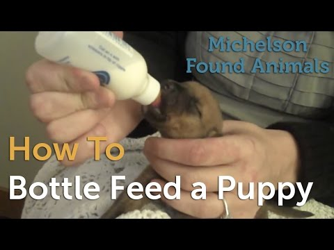 How to Bottle Feed a Puppy
