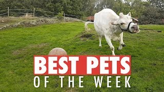 Best Pets of the Week | October 2018 Week 2