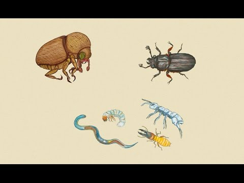 Bugs, Microbes, Biofuels, and Coffee