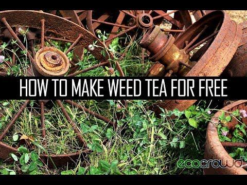 How to Make Weed Tea Liquid Fertiliser