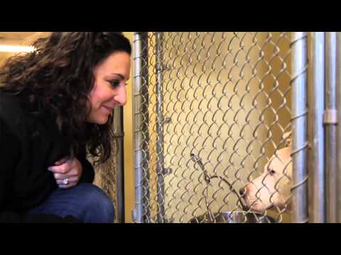 Reasons to Adopt A Rescue Dog -- Life in the Dog House Ep.12