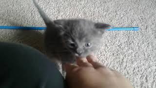 Meet Asriel!