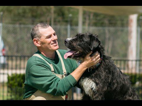 RSPCA Short Tails: Dog Rehabilitation Program