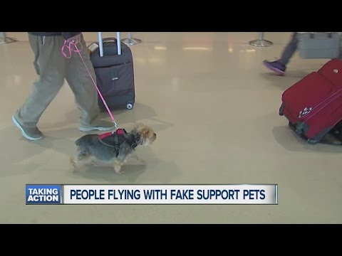People flying with fake support pets