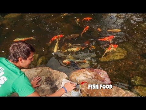 BACKYARD POND with $15,000 in KOI FISH!!