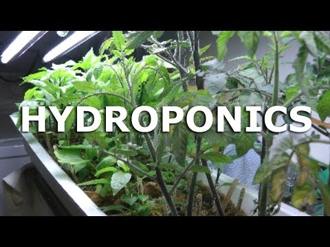 Grow Update - prepping plants for hydro