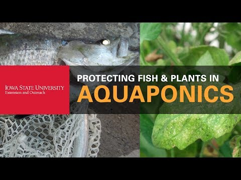 How to Protect My Fish and Plants in Aquaponics