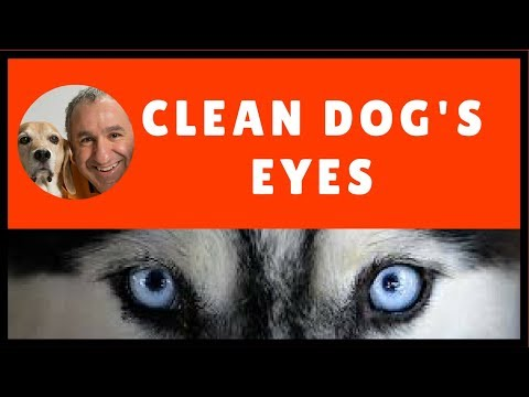 How to clean your dog's eyes.