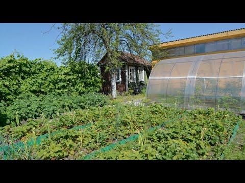 How to Plan a Budget Garden