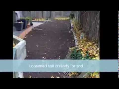 Renovating Lawns with Exposed Tree Roots Using an Air Spade