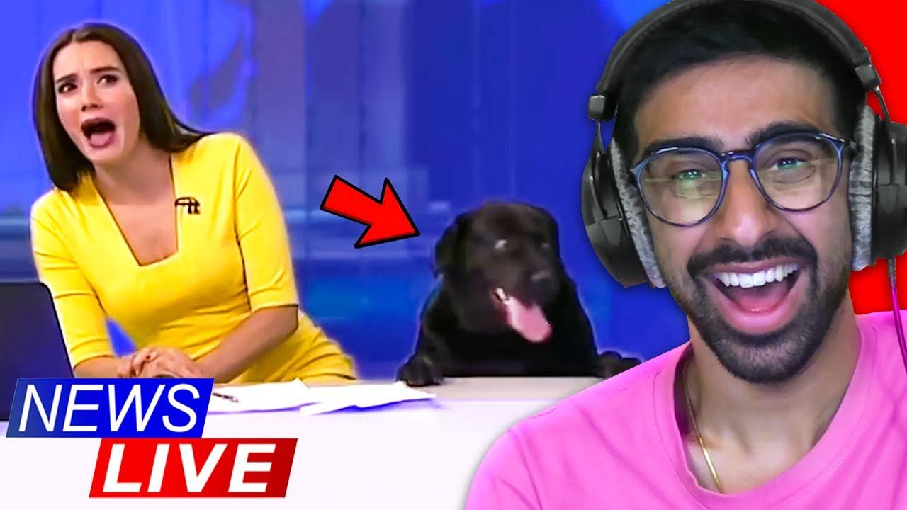 Funniest Animal News Bloopers!