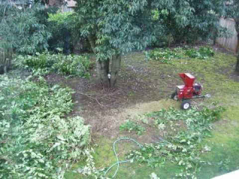 Trimming the big hedge