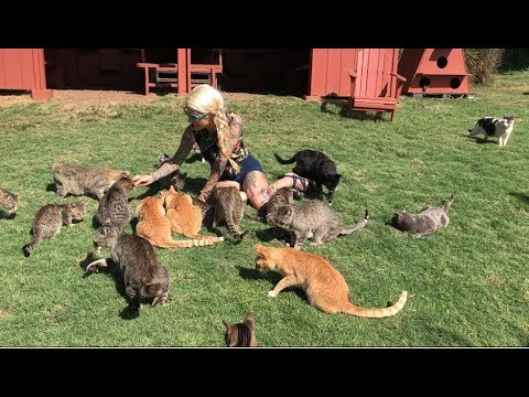 Live from Lanai Cat Sanctuary