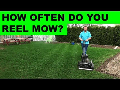 How often do you have to reel mow