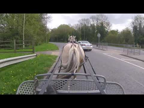 Training a Norwegian Fjord horse for carriage driving - Barry Hook, Horse Drawn Promotions