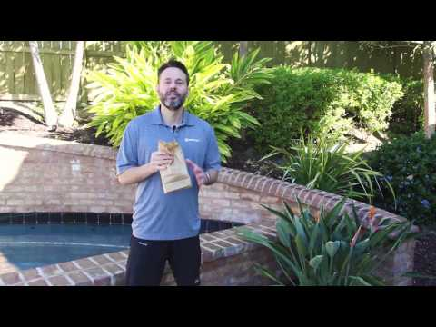 Tips and Tricks – Discourage Wasps Around the Pool