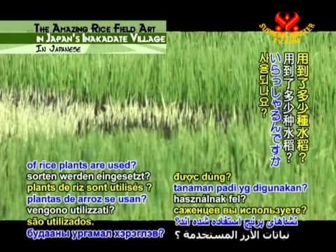 The Amazing Rice Field Art in Japan's Inakadate Village (In Japanese)
