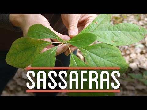 Sassafras | How to Make Everything: Root Beer Float (5/7)