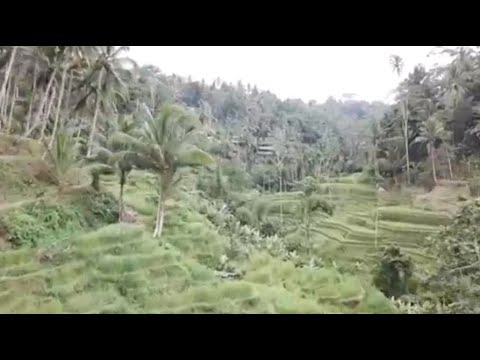 Our last video in Bali - GCITS Business Update #34