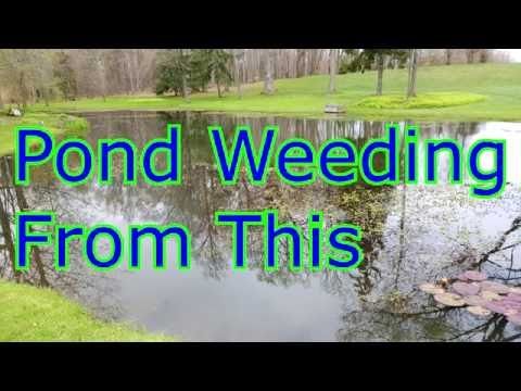 Pond Weeding parrots Feather Slender Pond Weed