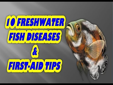 10 freshwater fish disease::: fish care & fish treatment