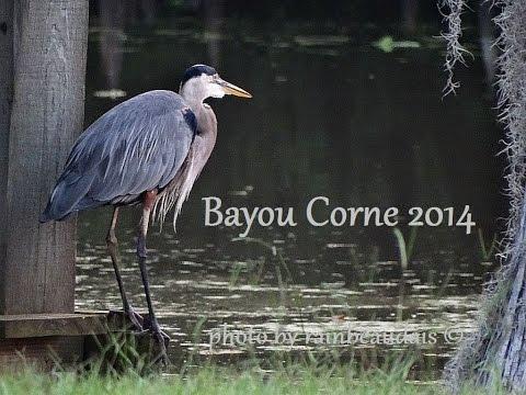Bayou Corne, Louisiana 2 Years Since The Sinkhole