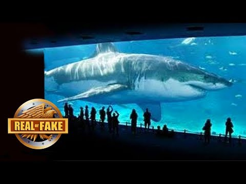 BILLIONAIRE BRINGS MEGALODON SPECIES BACK TO LIFE - real or fake?