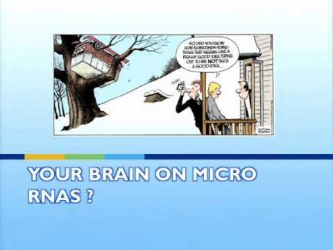 Micro RNAs in Mental Illness