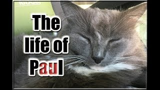 Day In The Life of a PaulVid! (INSANE SLEEPING INVOLVED)