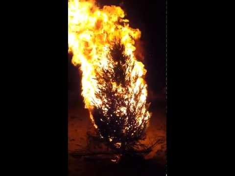 New Year's Eve Christmas Tree Bonfire, 2011 - Indialantic, Florida