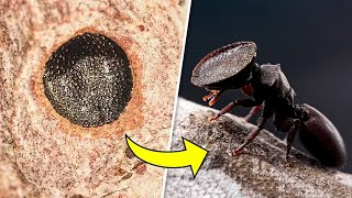 12 Most Intelligent Insects Predators in the World