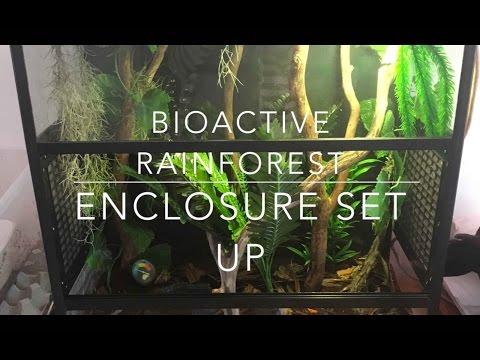 Bioactive Rainforest Enclosure Set Up